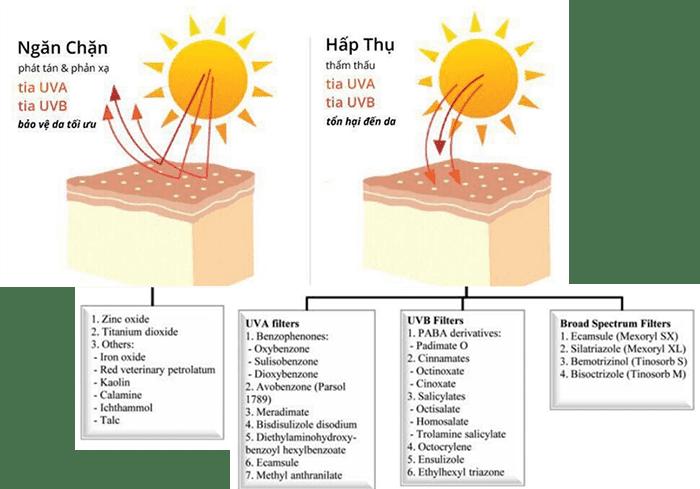 Cơ chế hoạt động của các hoạt chất chống nắng (yếu tố bảo vệ chính)