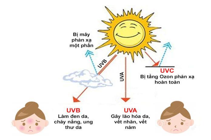 Tác động chủ yếu của các loại tia UV trong ánh sáng mặt trời